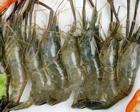 升金湖青虾