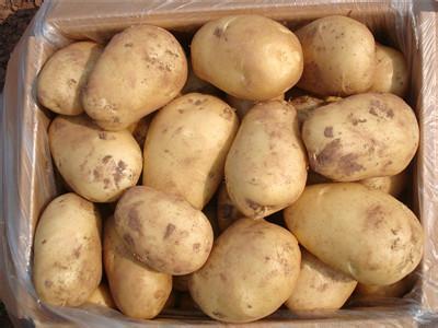 颍南马铃薯