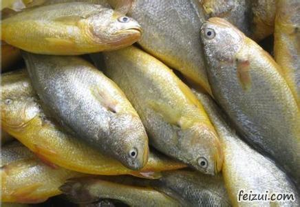 宁德大黄鱼
