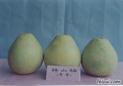 华安坪山柚