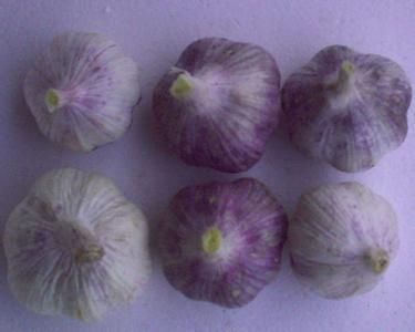古浪紫皮大蒜