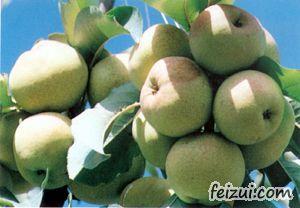 民乐苹果梨