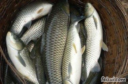 信宜凼仔鱼