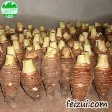 乐昌张溪香芋