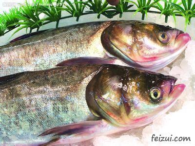 大化大头鱼