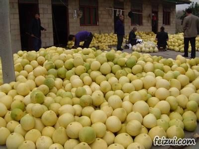 思州文旦柚