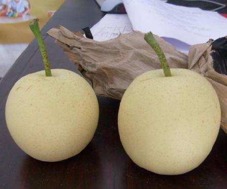 博野黄冠梨