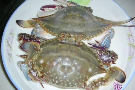 黄骅梭子蟹