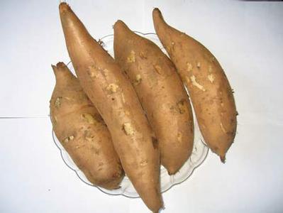 晋州山林红薯