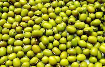 宣化鹦哥绿豆