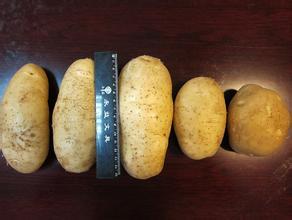 康保马铃薯