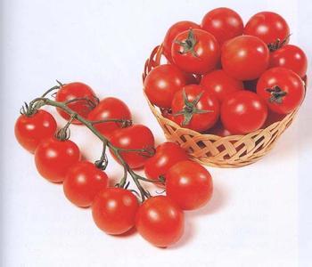 汤阴樱桃西红柿