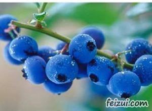 大兴安岭蓝莓