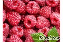 尚志红树莓