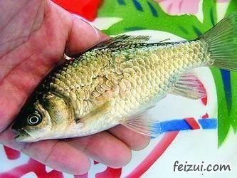 五大连池鲤鱼