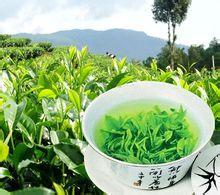 白龙潭云雾茶