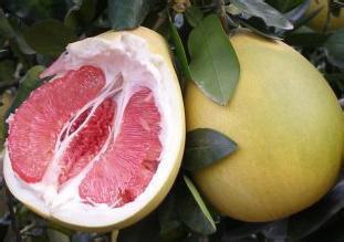泉水红肉蜜柚