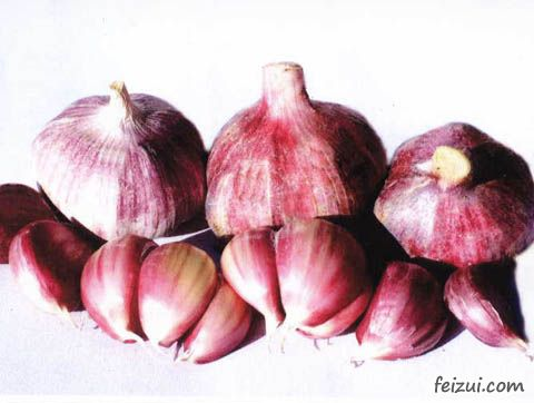 茶陵紫皮大蒜