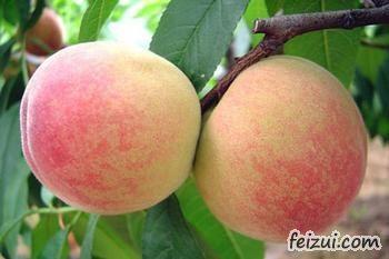 惠山阳山水蜜桃
