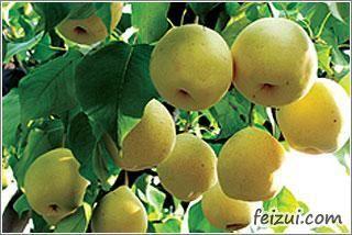 新余黄花梨