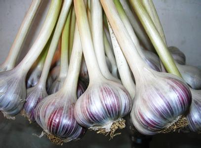 上高紫皮大蒜