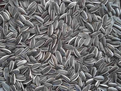 长岭葵花籽