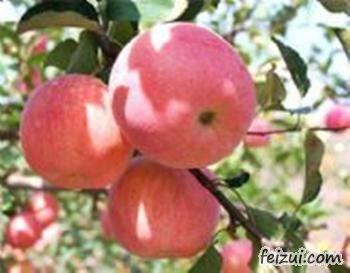 扁担沟苹果