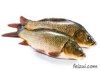 黄河乡鲤鱼