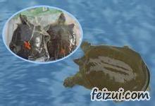 白云湖甲鱼