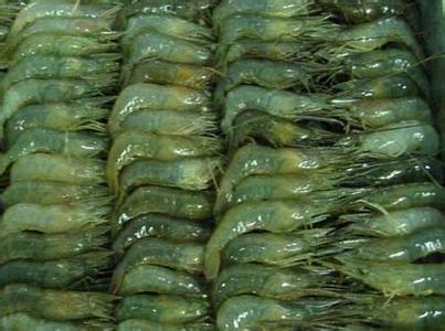微山湖青虾