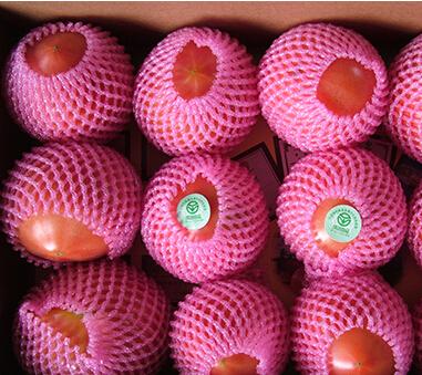 沙柳村西红柿