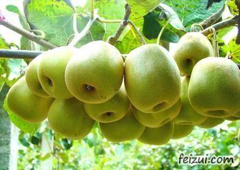 博山猕猴桃