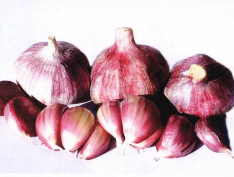 蔡家坡紫皮大蒜