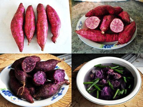 镇巴紫芯红薯