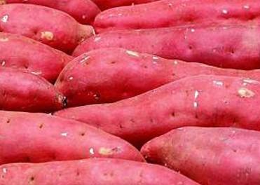合阳北雷红薯