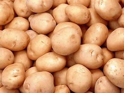 吴堡马铃薯