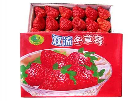 双流冬草莓