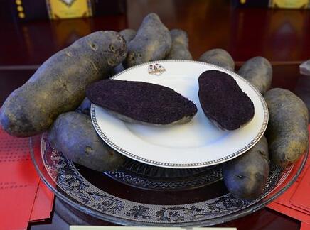 巴塘黑美人土豆