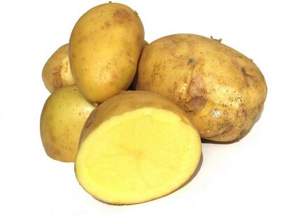 喜德马铃薯