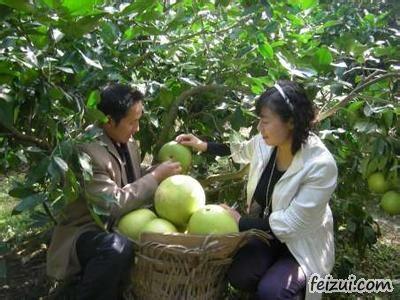 仪陇元帅柚