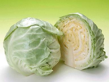 阳高圆白菜