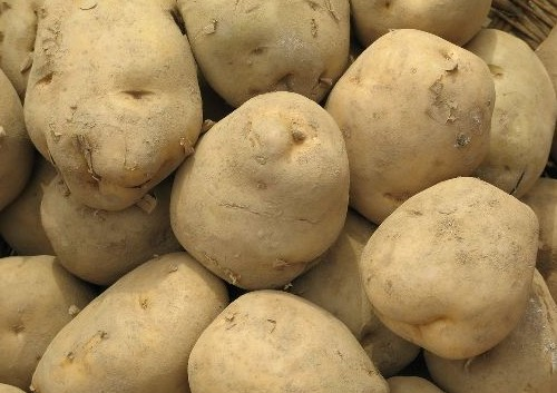 汾西马铃薯