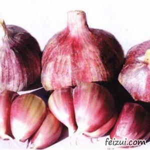 应县紫皮大蒜