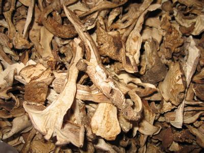 岢岚银盘蘑菇