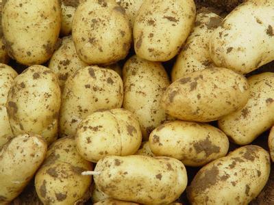 拜城马铃薯