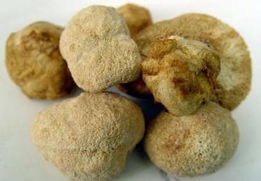 常山猴头菇