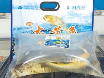 南麂大黄鱼