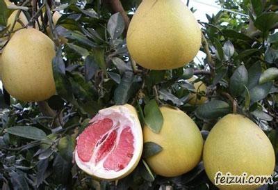丰都红心柚