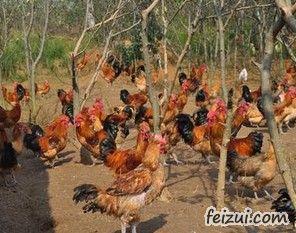�闵酵�鸡
