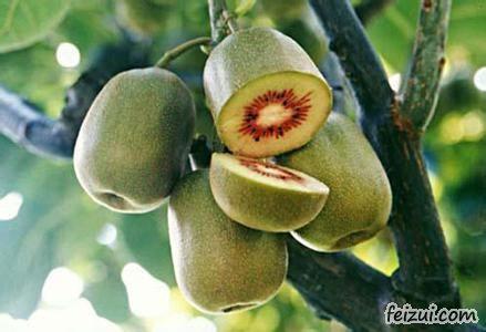 黑山谷猕猴桃
